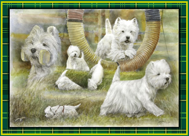 West Highland White Terrier Club of America